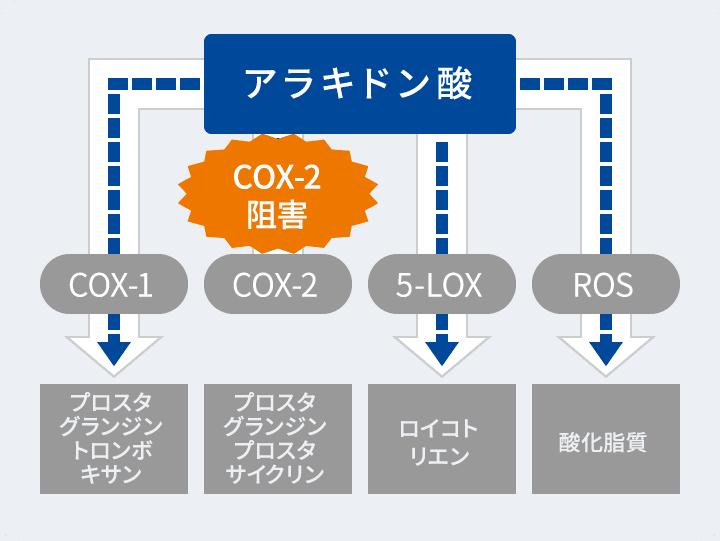COX-2阻害 図